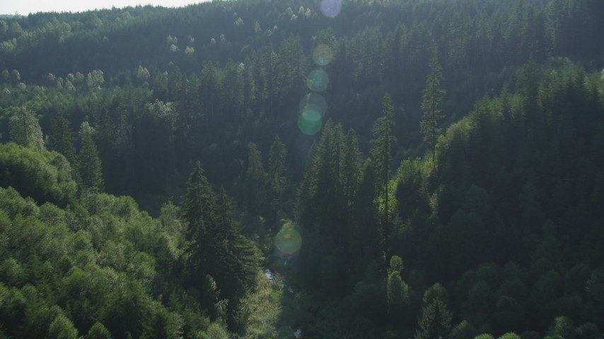 5K stock footage aerial video fly over and pan across evergreen trees at the base of mountains in the Cascade Range, Washington Aerial Stock Footage | AX48_086