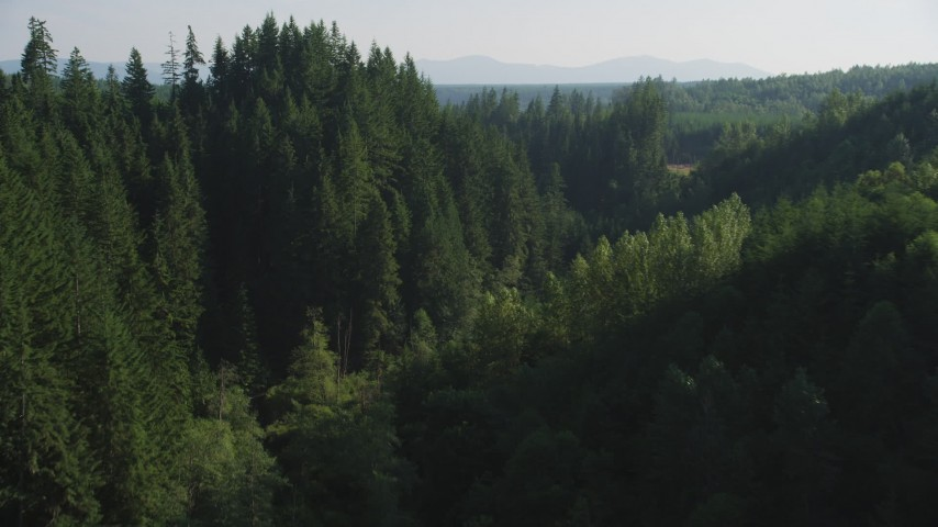 5K stock footage aerial video approach a group of tall evergreen trees in the Cascade Range, Washington Aerial Stock Footage | AX48_087