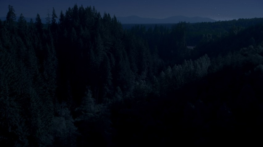 4K day for night color corrected aerial footage of a group of tall evergreen trees in the Cascade Range, Washington Aerial Stock Footage | AX48_087_DFN
