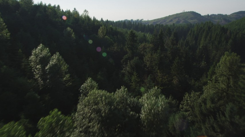 5K stock footage aerial video fly low over a cluster of deciduous trees and evergreen forest in King County, Washington Aerial Stock Footage | AX48_091