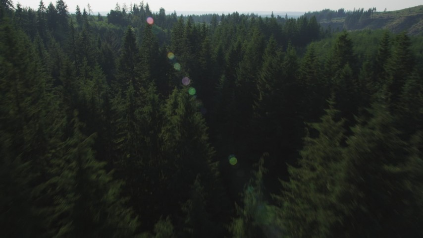5K stock footage aerial video of flying low over the treetops in an evergreen forest, King County, Washington Aerial Stock Footage | AX48_092