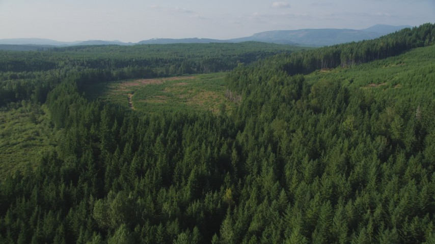 5K aerial video fly over evergreen and pan across forest and clear cut areas, King County, Washington Aerial Stock Footage | AX48_094