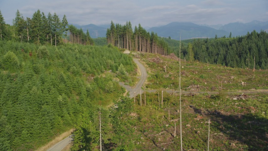 5K aerial video of panning across a road through a clear cut area in the forest, King County, Washington Aerial Stock Footage | AX48_095