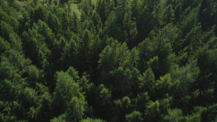 5K aerial video of bird's eye view of evergreen trees and a clearing, King County, Washington Aerial Stock Footage | AX49_001