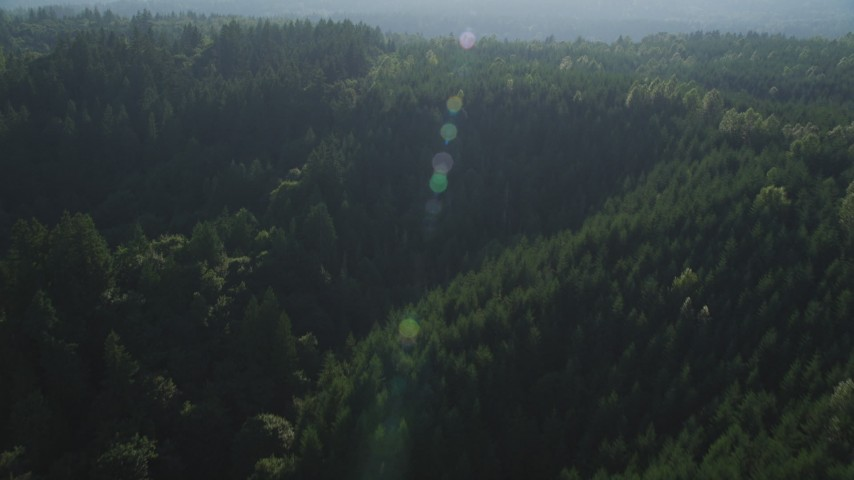 5K aerial stock footage video fly over an evergreen forest in King County, Washington Aerial Stock Footage | AX49_021
