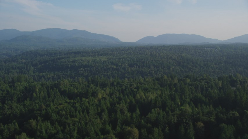 5K stock footage aerial video fly by a wide expanse of evergreen forests, King County, Washington Aerial Stock Footage | AX49_023