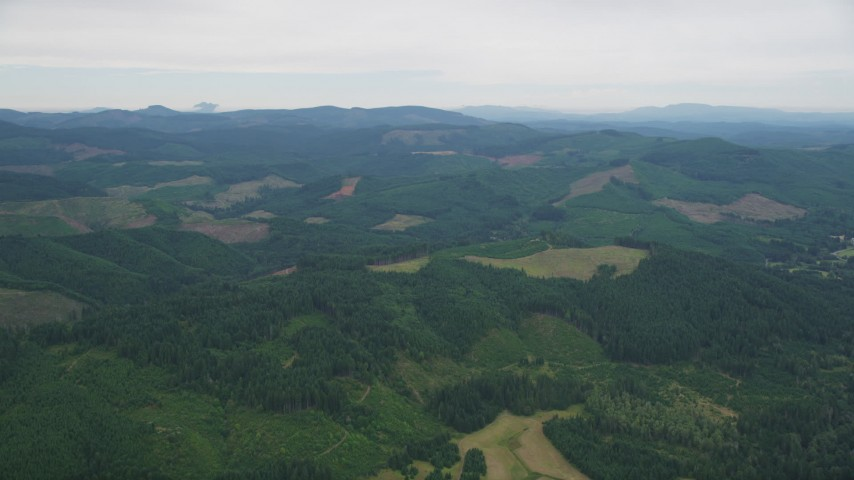 5K stock footage aerial video fly over evergreen forest and logging areas in Washington County, Oregon Aerial Stock Footage | AX56_020