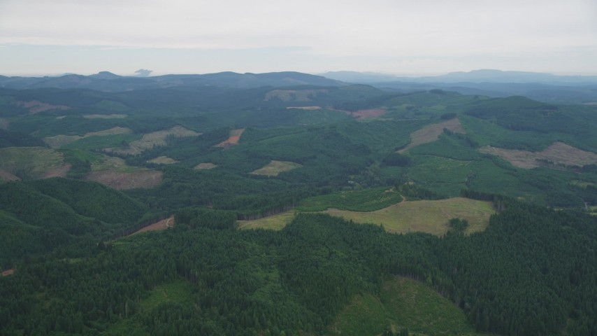 5K stock footage aerial video of flying over evergreen forest and clear cuts areas in Washington County, Oregon Aerial Stock Footage | AX56_021