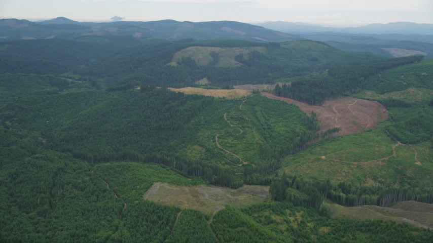 5K stock footage aerial video of large logging areas in evergreen forest in Washington County, Oregon Aerial Stock Footage | AX56_025