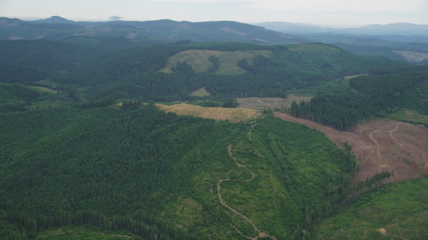 5K stock footage aerial video of logging areas in an evergreen forest in Washington County, Oregon Aerial Stock Footage | AX56_026