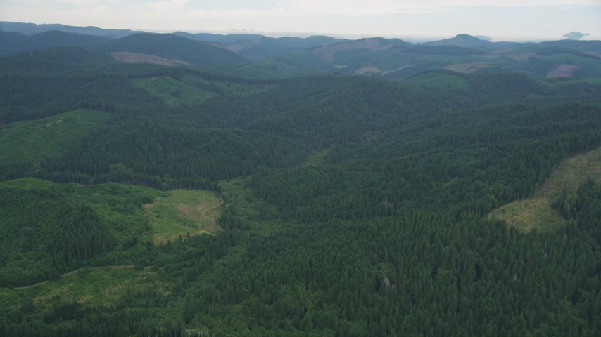 5K stock footage aerial video of logging areas and vast evergreen forest in Washington County, Oregon Aerial Stock Footage | AX56_028