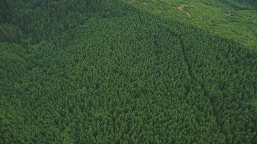 5K stock footage aerial video of bird's eye of dirt roads through evergreen forest and logging areas in Washington County, Oregon Aerial Stock Footage | AX56_029