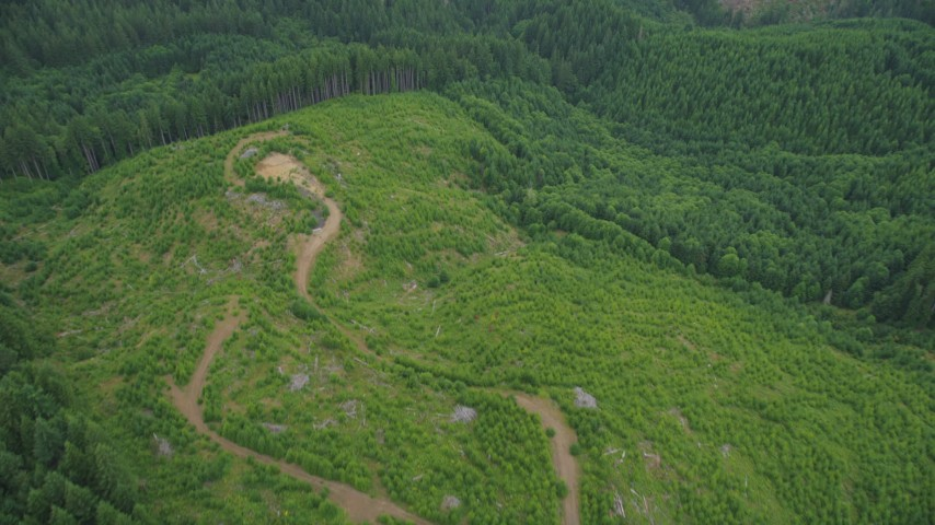 5K stock footage aerial video of a dirt road in a logging area and evergreen forest in Washington County, Oregon Aerial Stock Footage | AX56_030