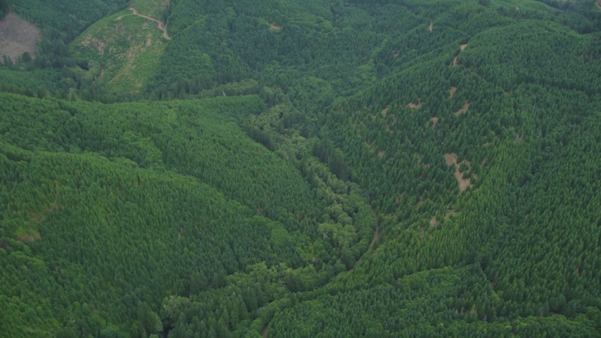 5K stock footage aerial video tilt to bird's eye of evergreen forest in Washington County, Oregon Aerial Stock Footage | AX56_031
