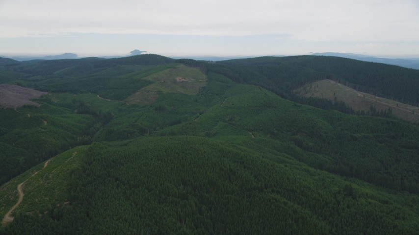 5K stock footage aerial video fly over forest to approach a hillside clear cut area in Washington County, Oregon Aerial Stock Footage | AX56_032