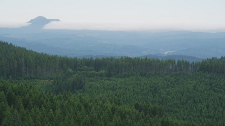 5K stock footage aerial video of flying over evergreen trees with a wide view of distant forest in Clatsop County, Oregon Aerial Stock Footage | AX56_033