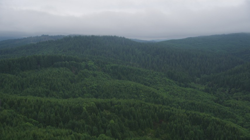 5K stock footage aerial video fly over evergreen forest on hills in Clatsop County, Oregon Aerial Stock Footage | AX56_042