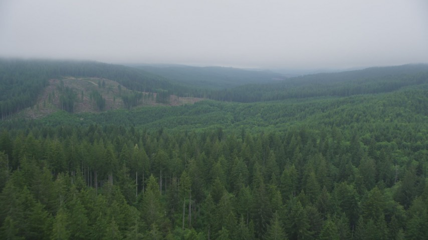 5K stock footage aerial video fly over evergreen forest to approach a hillside clear cut area, Clatsop County, Oregon Aerial Stock Footage   AX56_045