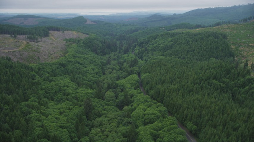 5K stock footage aerial video follow State Route 202 through evergreen forest near clear cut areas, Clatsop County, Oregon Aerial Stock Footage | AX56_052