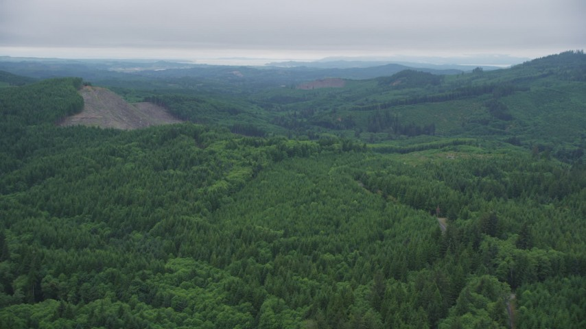 5K stock footage aerial video approach logging area while flying over evergreen trees in Clatsop County, Oregon Aerial Stock Footage | AX56_056