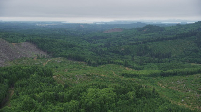 5K stock footage aerial video fly over clear cut area with new growth near evergreen trees in Clatsop County, Oregon Aerial Stock Footage | AX56_057