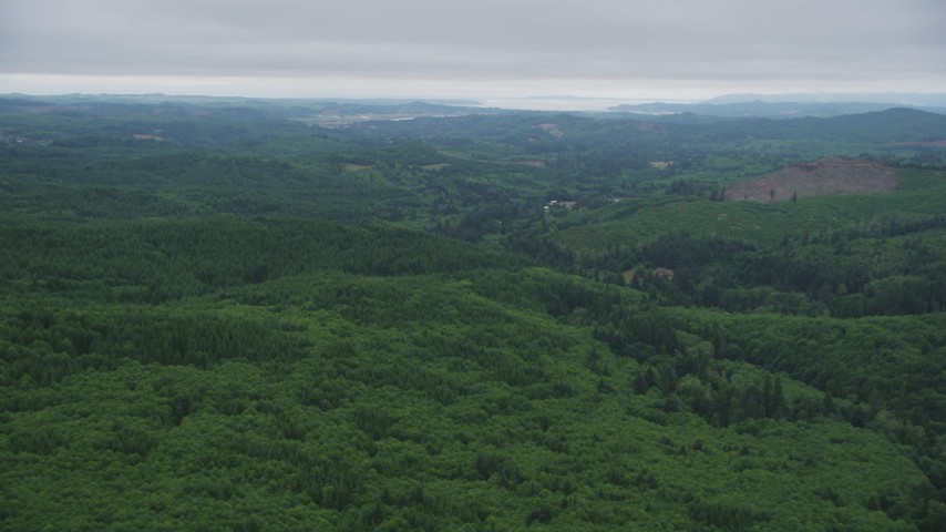 5K stock footage aerial video of a wide expanse of evergreen forest in Clatsop County, Oregon Aerial Stock Footage | AX56_059