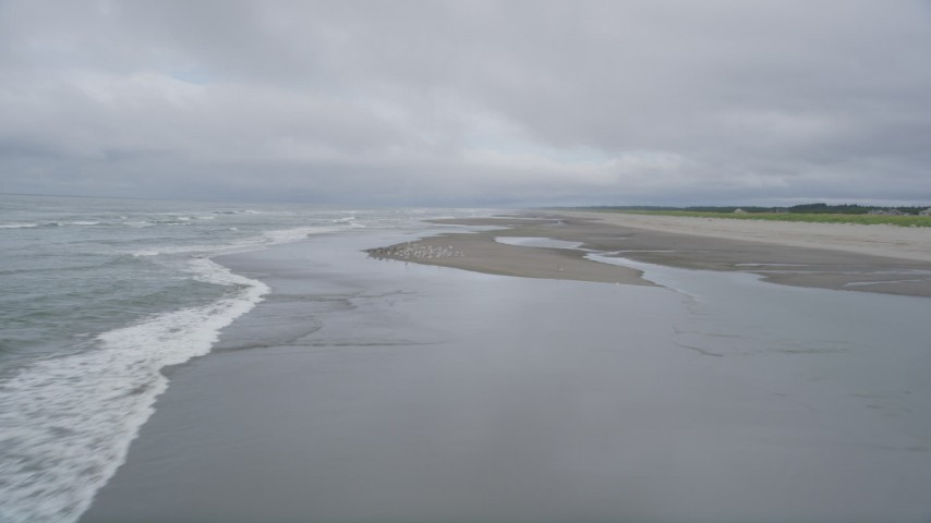 5K stock footage aerial video of waves rolling into an empty beach, and seagulls taking flight in Long Beach, Washington Aerial Stock Footage | AX56_142
