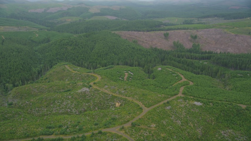 5K stock footage aerial video fly over new growth in a clear cut area near evergreens in Pacific County, Washington Aerial Stock Footage | AX56_158