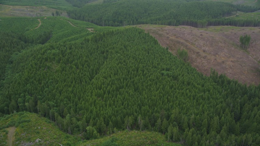 5K stock footage aerial video tilt to a bird's eye view of evergreen trees beside a logging area in Pacific County, Washington Aerial Stock Footage | AX56_159