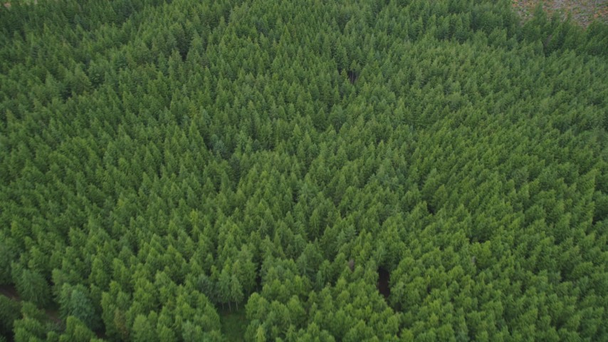5K stock footage aerial video tilt to a bird's eye view of evergreen forest in Pacific County, Washington Aerial Stock Footage | AX56_160