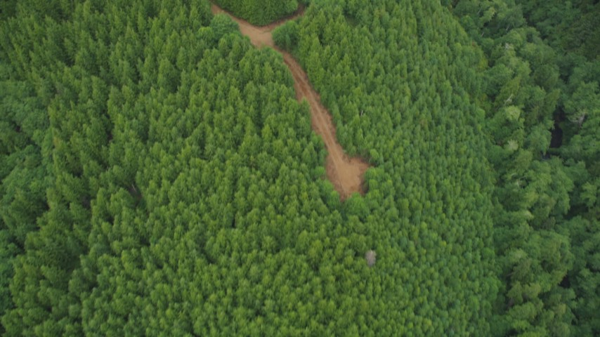 5K stock footage aerial video bird's eye view of evergreen trees and dirt roads in Pacific County, Washington Aerial Stock Footage | AX56_161