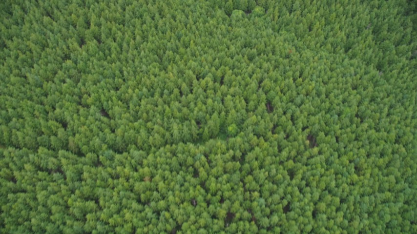5K stock footage aerial video of a bird's eye view of an evergreen forest in Pacific County, Washington Aerial Stock Footage | AX56_162