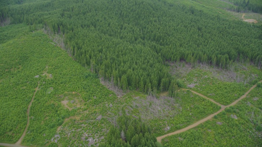 5K stock footage aerial video of dirt road through a logging area, and bird's eye of evergreen forest in Pacific County, Washington Aerial Stock Footage | AX56_163