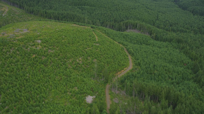 5K stock footage aerial video of a dirt road through a logging area on the edge of a forest in Pacific County, Washington Aerial Stock Footage | AX56_166