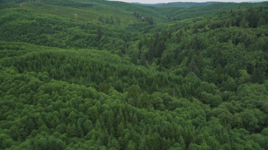 5K stock footage aerial video fly over a forest of evergreen trees in Pacific County, Washington Aerial Stock Footage | AX56_178
