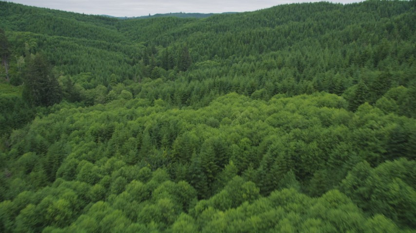 5K stock footage aerial video fly over a forest full of evergreen trees in Pacific County, Washington Aerial Stock Footage   AX56_179