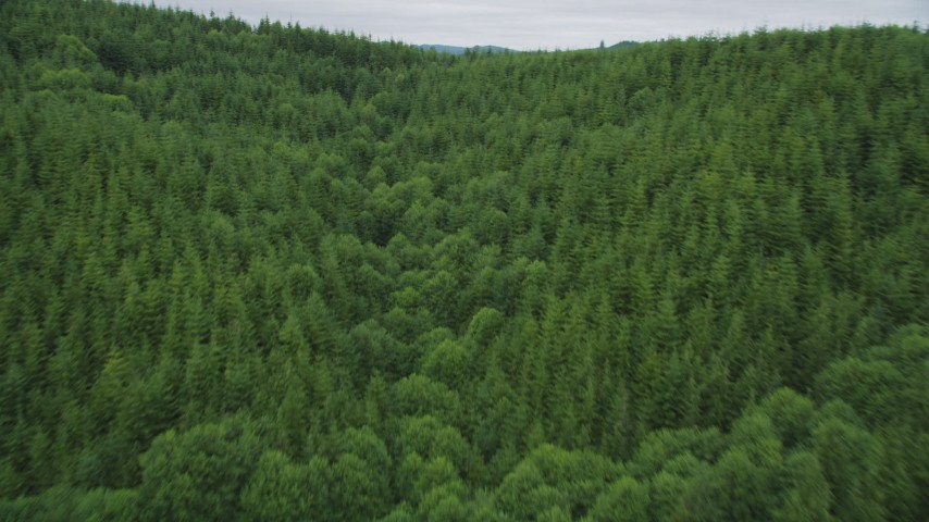5K stock footage aerial video of a forest of evergreen trees in Pacific County, Washington Aerial Stock Footage | AX56_180