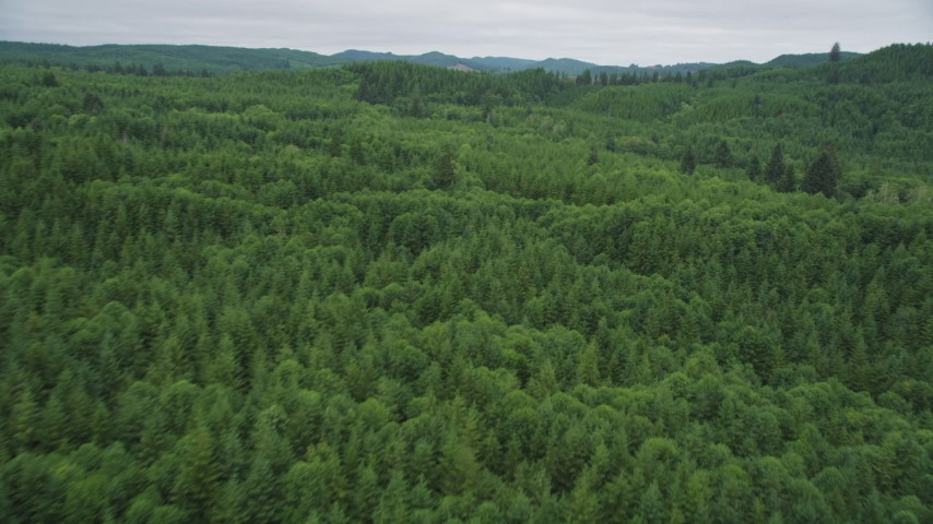 5K stock footage aerial video fly over and pan across a forest of evergreen trees in Pacific County, Washington Aerial Stock Footage | AX56_182