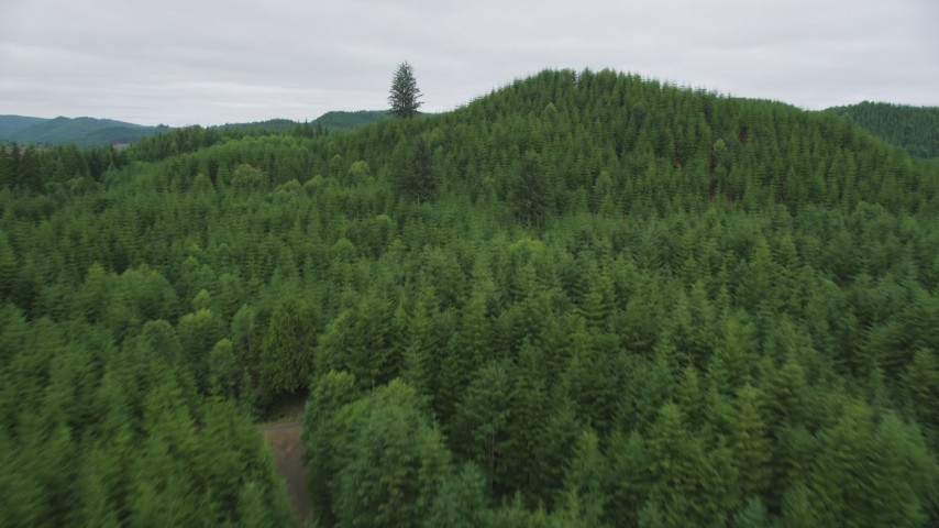 5K stock footage aerial video fly over evergreen forest and hills in Pacific County, Washington Aerial Stock Footage | AX56_183