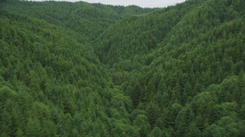 5K stock footage aerial video fly between hills covered in evergreen forest in Pacific County, Washington Aerial Stock Footage | AX56_184