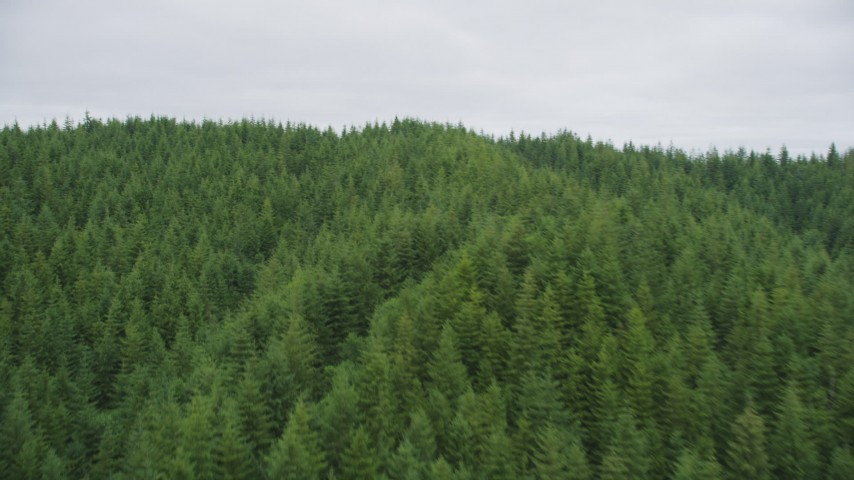 5K stock footage aerial video of flying over evergreen forest covering a hill in Pacific County, Washington Aerial Stock Footage | AX56_185
