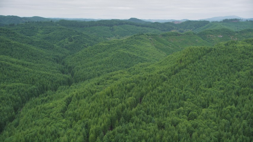 5K stock footage aerial video fly over forest-covered hills in Pacific County, Washington Aerial Stock Footage | AX56_186