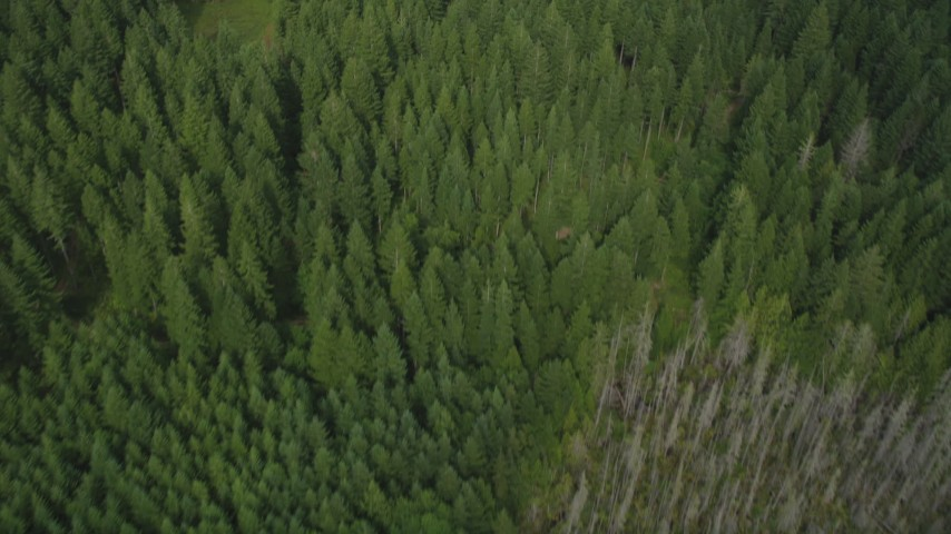 5K stock footage aerial video of a bird's eye view of an evergreen forest in Shelton, Washington Aerial Stock Footage | AX58_006