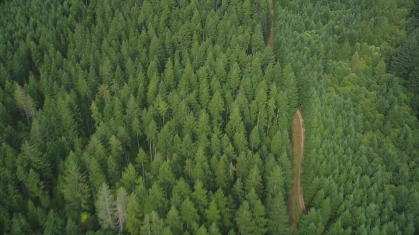 5K stock footage aerial video of bird's eye view of a dirt road through an evergreen forest in Shelton, Washington Aerial Stock Footage | AX58_007