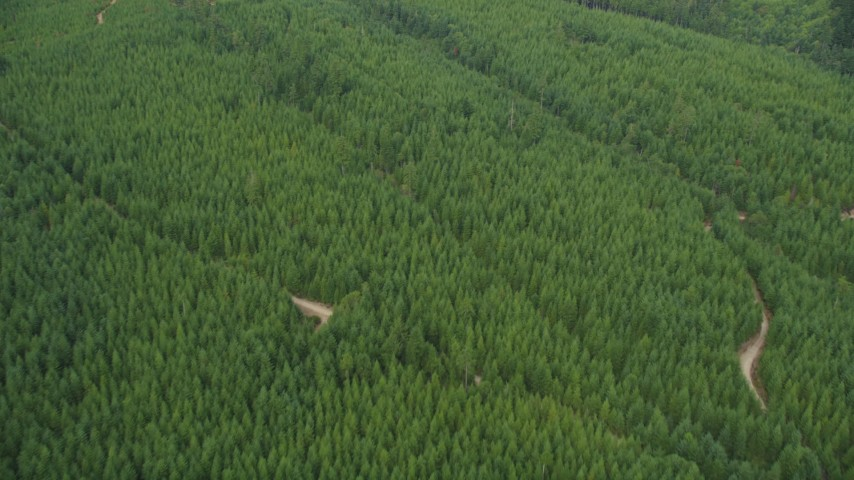 5K stock footage aerial video fly over an evergreen forest and dirt roads in Grapeview, Washington Aerial Stock Footage | AX58_019