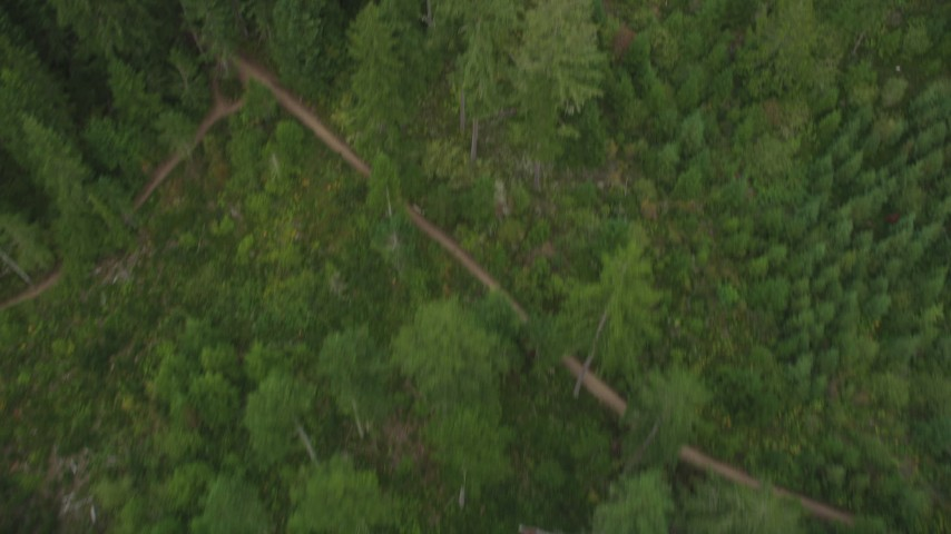 5K stock footage aerial video of bird's eye view of evergreens, and reveal dirt roads in Gig Harbor, Washington Aerial Stock Footage | AX58_041