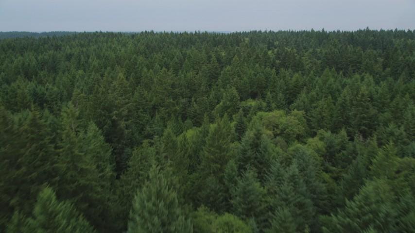 5K stock footage aerial video fly over evergreen trees on Vashon Island, Washington Aerial Stock Footage   AX58_056