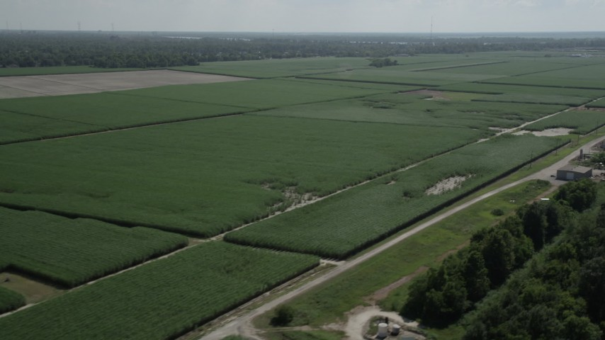 5K aerial video of flying by sugar cane fields, La Place, Louisiana Aerial Stock Footage | AX60_011
