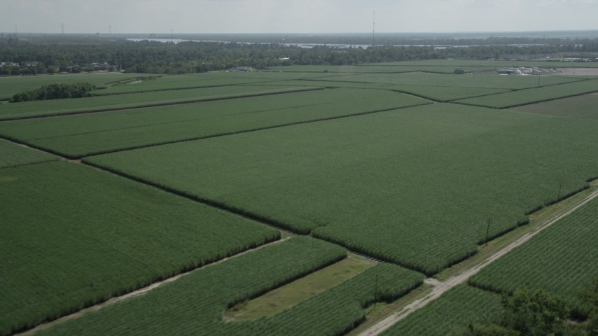 5K aerial video of sugar cane fields in La Place, Louisiana Aerial Stock Footage | AX60_012
