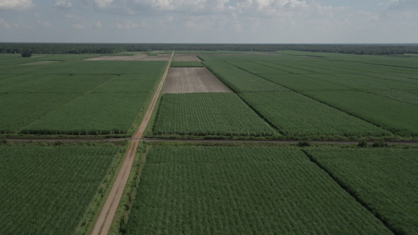 5K stock footage aerial video of flying over harvested areas and sugar cane fields, Vacherie, Louisiana Aerial Stock Footage | AX60_051